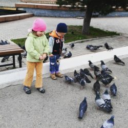 deti kormyat golubey