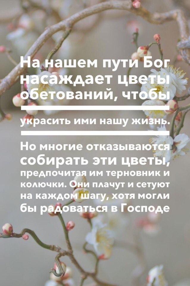 Цветы обетований