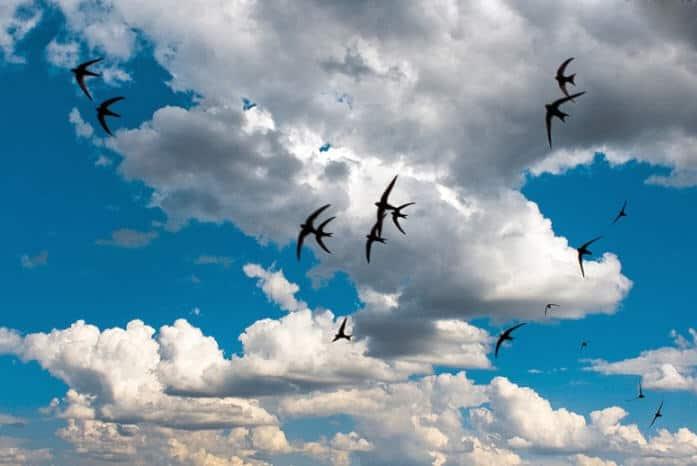 Lastochki v nebe