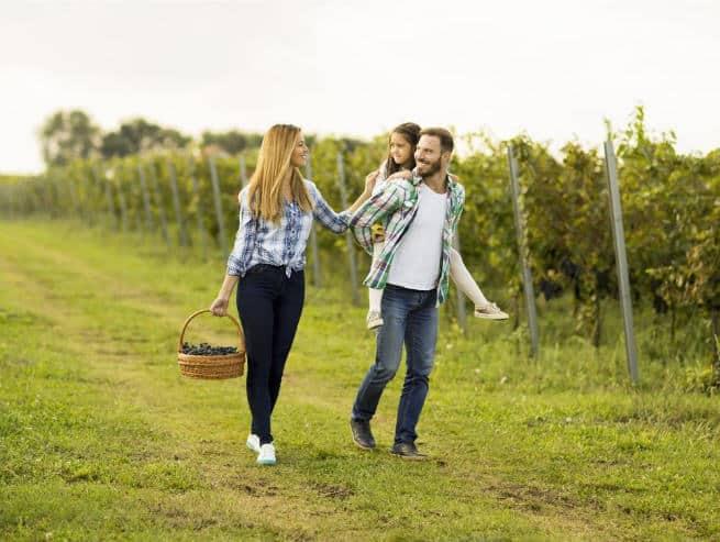 Svoy vinogradnik na pervom meste