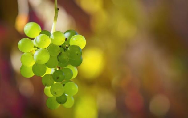 Плод же Духа: радость