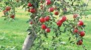 Плод праведника