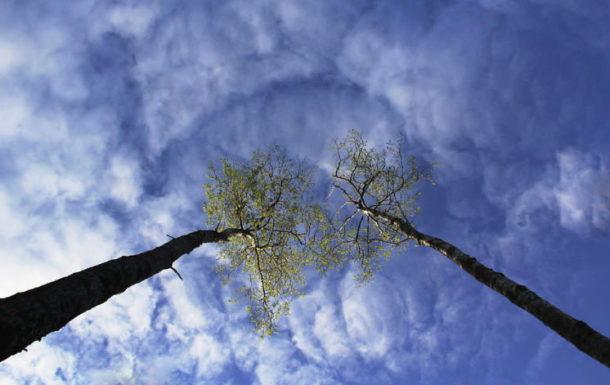 Посмотри вверх