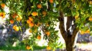 Богоугодный плод